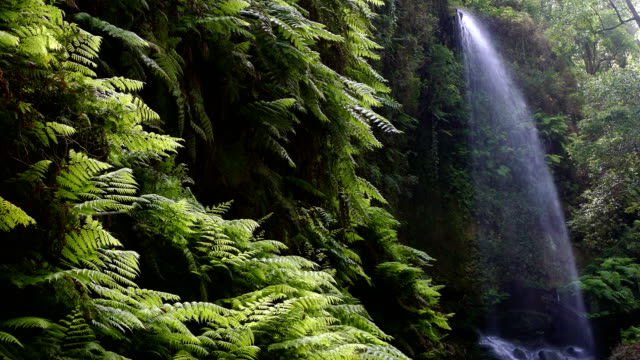 """waterfall """"the lindens"""",in island of la palma, canary islands, spain. - cespuglio tropicale video stock e b–roll"""
