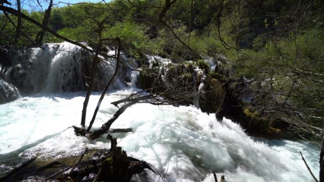 waterfall with forest - национальный парк плитвицкие озёра стоковые видео и кадры b-roll