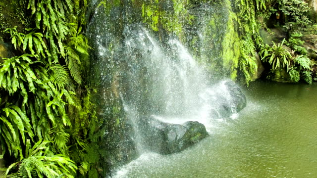 Waterfall with green leafs loop video
