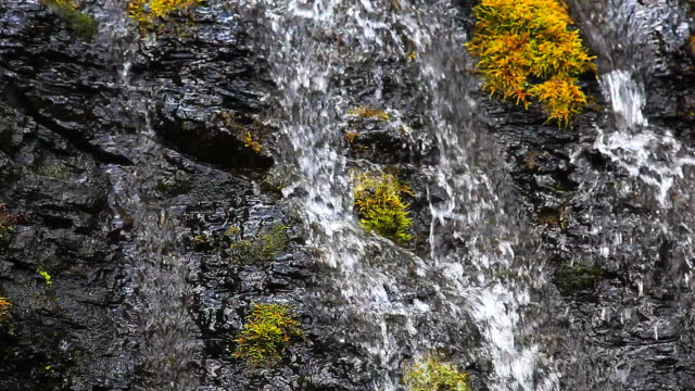 waterfalls with Lichen and green moss