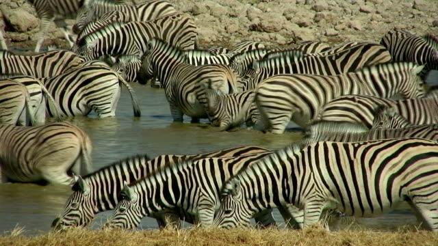 waterhole_Zebra