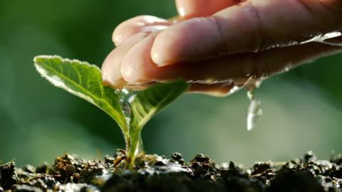 annaffiare una pianta in naturale - accudire video stock e b–roll
