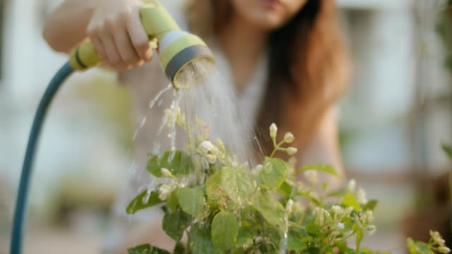 watering a plant - orticoltura video stock e b–roll