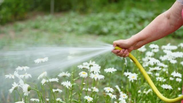 Bидео Watering flowers in summer.