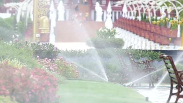 watering flowers in the garden video