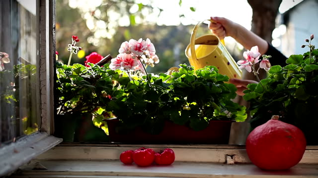 HD: Arroser des fleurs - Vidéo