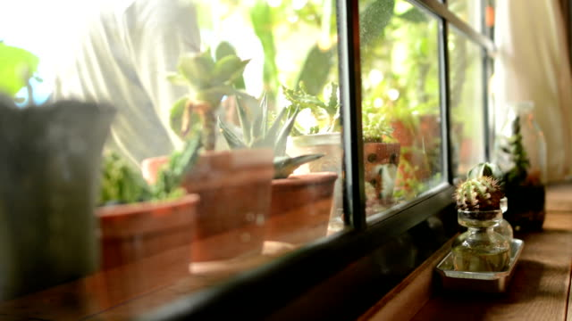 watering flowers - kwiat roślina filmów i materiałów b-roll