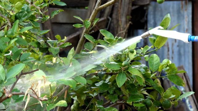 watering garden with hose - tubo flessibile video stock e b–roll