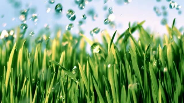 vídeos de stock, filmes e b-roll de dar grama câmera lenta - gramado terra cultivada