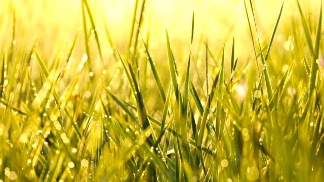 Watering Grass video