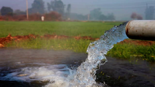 watering in the green field using tubewell - haryana video stock e b–roll