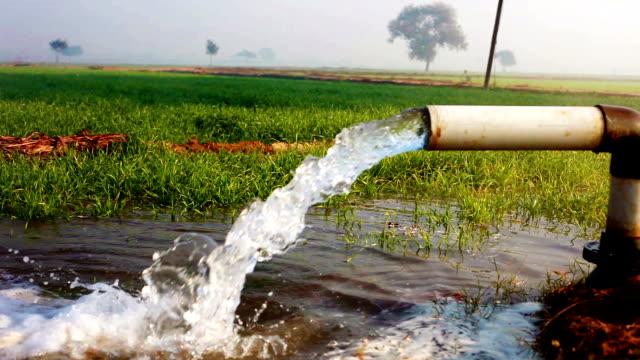 im grünen feld mit tubewell bewässerung - bewässerungsanlage stock-videos und b-roll-filmmaterial