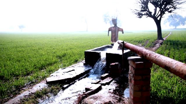 irrigazione nel campo verde utilizzando tubewell - acqua dolce video stock e b–roll