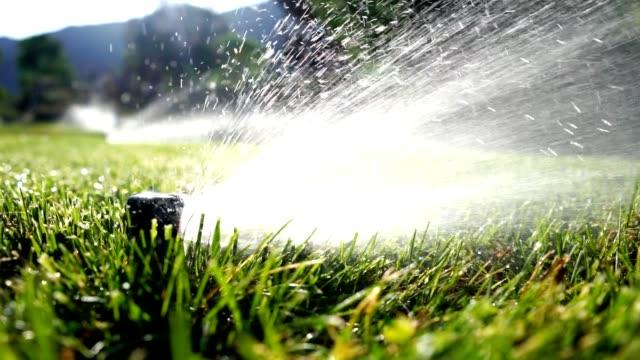vidéos et rushes de arrosage irrigation arrosage de pelouse - arroser