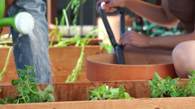 gießen pflanzen  - dachgarten videos stock-videos und b-roll-filmmaterial