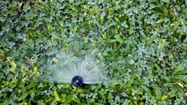 Watering system works on lawn with fresh green grass. Drops of water falling on wet ground.
