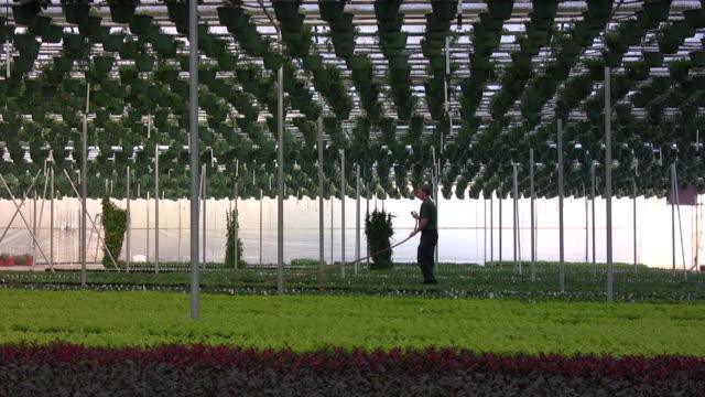 Watering the crop video