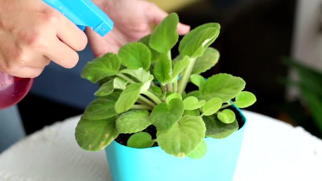 vidéos et rushes de arrosage aux plantes - botanique