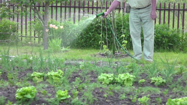 スローモーション 250 fps で野菜の庭の水やり - 花壇点の映像素材/bロール