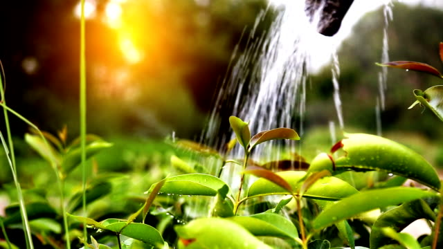 watering - plants stock videos & royalty-free footage