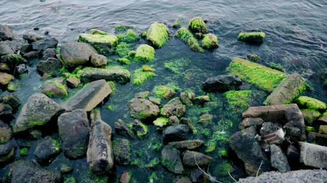 Waves crash into moss-covered rocks. Slow Motion.