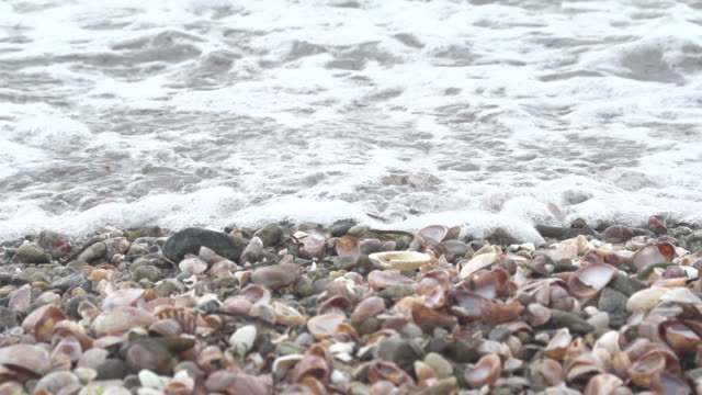 Waves Crash Over Shells on Beach video