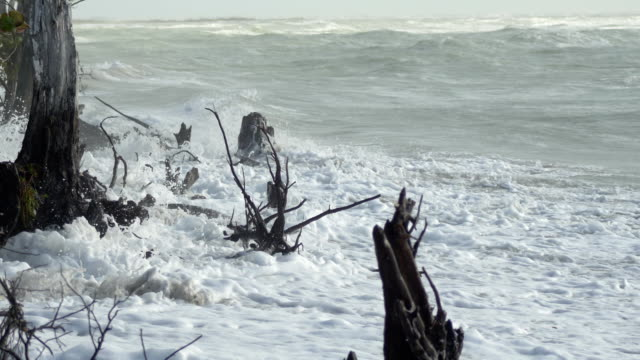 Waves crashing into stumps and driftwood on cloudy beach video