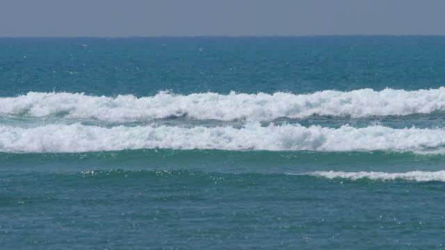 コーラルリーフの波 ビデオ