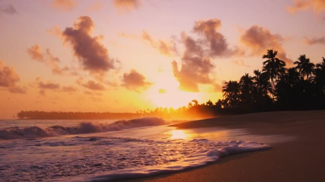 Waves on the sand of a beautiful wild tropical beach Silhouettes of palm trees on the background of golden sunset caribbean stock videos & royalty-free footage