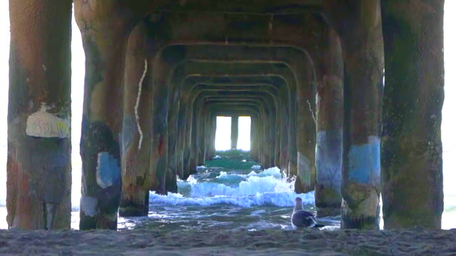 Waves rolling in under a pier (a siegel is walking on the beach) Manhattan Beach, California b roll stock videos & royalty-free footage