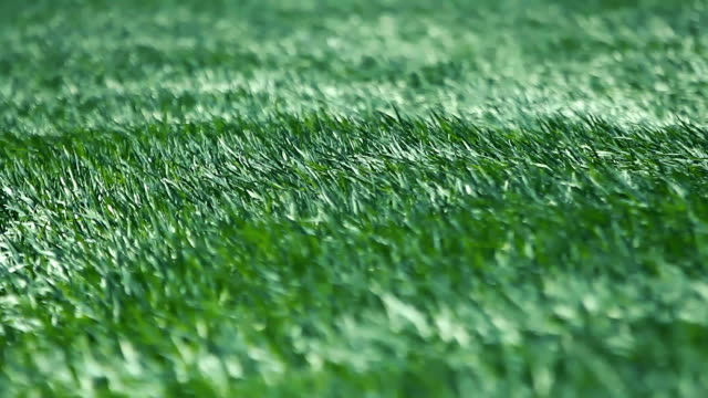 vídeos de stock e filmes b-roll de waving green spring wheat field - oscilar