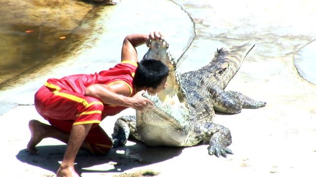 vidéos et rushes de agitant sa main en bouche avec de crocodiles - innocence