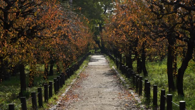 way in the park, autumn season, yellow leaf video