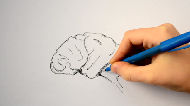 We draw a brain. Medical subject. genius stock videos & royalty-free footage