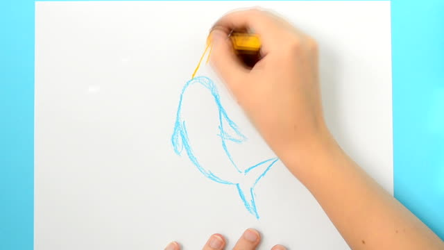 We draw a dolphin. Monodon monoceros.The child draws the picture. The accelerated video. video
