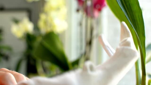 stockvideo's en b-roll-footage met het dragen van de juiste doek handschoen voor betere bescherming van de huid bij het werken met planten - lipbalsem