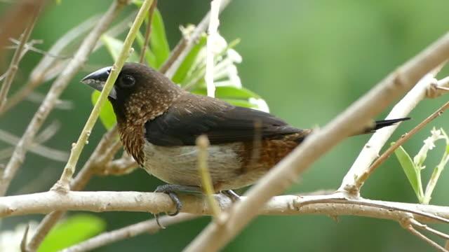 Weaver bird on tree branch