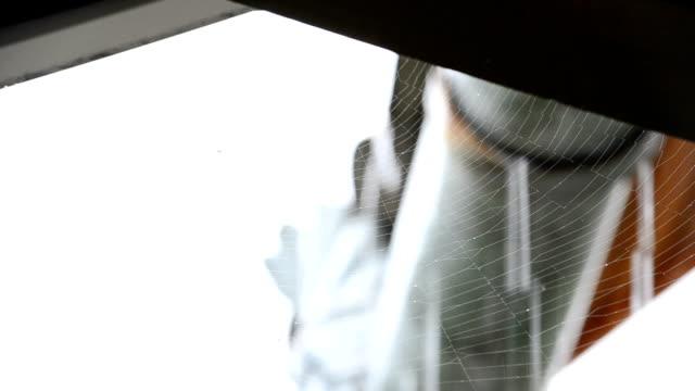 Web and rain video