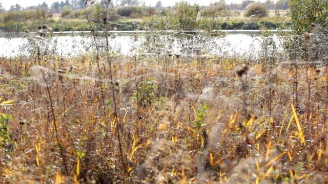 Web on autumn grass video