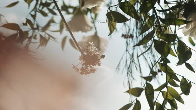 bröllop dekoration. dekor av blommor. - blommönster bildbanksvideor och videomaterial från bakom kulisserna