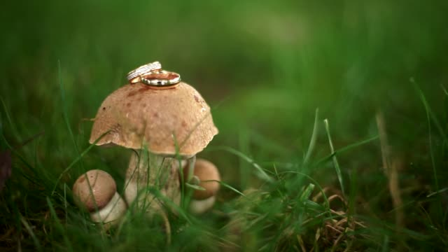 Wedding rings on a small beautiful mushroom in the forest Wedding rings on a small beautiful mushroom in the forest. Shallow depth of field. Camera goes on rails. fairy stock videos & royalty-free footage
