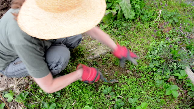 Weeding vegetable patch Close up of mature woman wearing straw hat digging up weeds in overgrown vegetable patch weeding stock videos & royalty-free footage