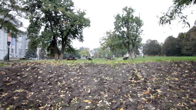 stockvideo's en b-roll-footage met weekend in een groen park van de herfst. crow wandelen op een gras. - blue sky