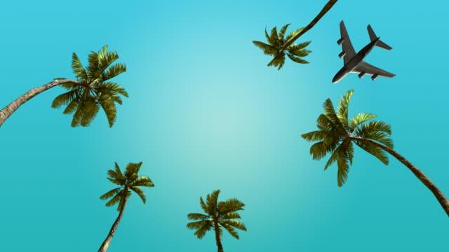 我々 は飛行機で海に旅行の週末。 - ヤシの木点の映像素材/bロール
