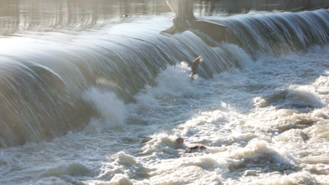 Weir on river Zschopau in Saxony with high water video