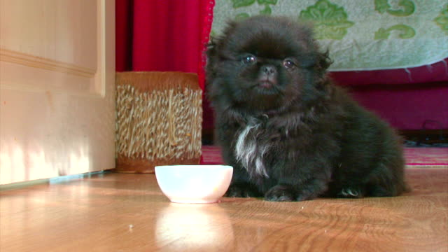 Well-fed and contented puppy video