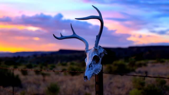 stockvideo's en b-roll-footage met westerse woestijn concepten: herten schedel op een hek post - dierlijk bot