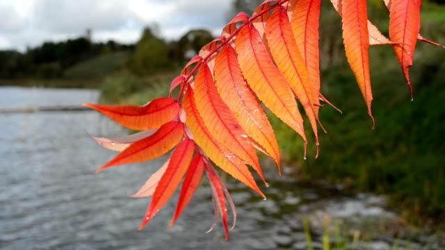wet autumn leaf move video