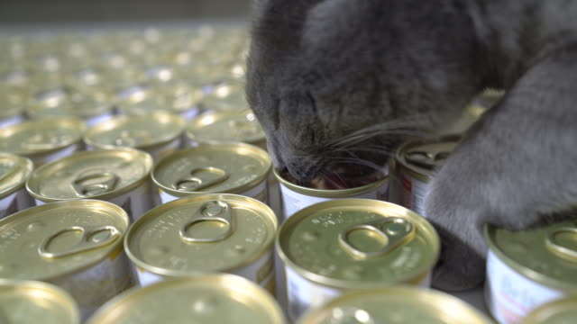 vídeos de stock e filmes b-roll de wet canned food for cats. many tin cans of pet food. cat eating meal from a can - lata comida gato