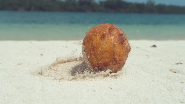 SLOW MOTION: Wet hairy coconut falls onto white sandy beach near beautiful ocean SLOW MOTION, CLOSE UP, LOW ANGLE: Wet hairy coconut falls onto white sandy beach near beautiful ocean. Grains of sand stick to wet coconut rolling along sandy tropical coast in the Pacific Islands. coconut stock videos & royalty-free footage